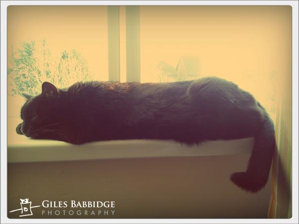 Office Cat Sleeps