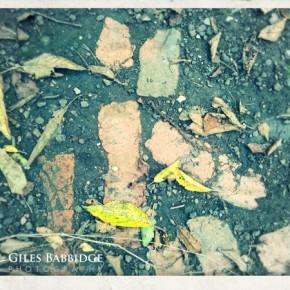 Brick And Leaf