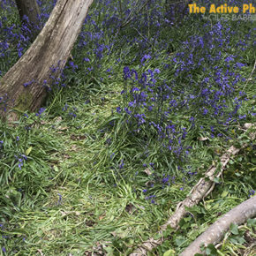 Video: As Bluebells Fade