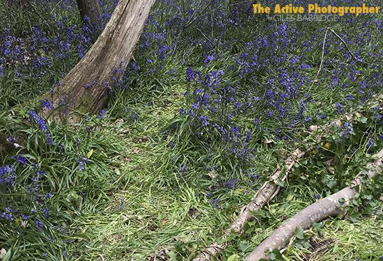 Video: As Bluebells Fade