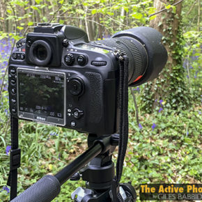 Episode #239: Filming And Photographing Bluebells